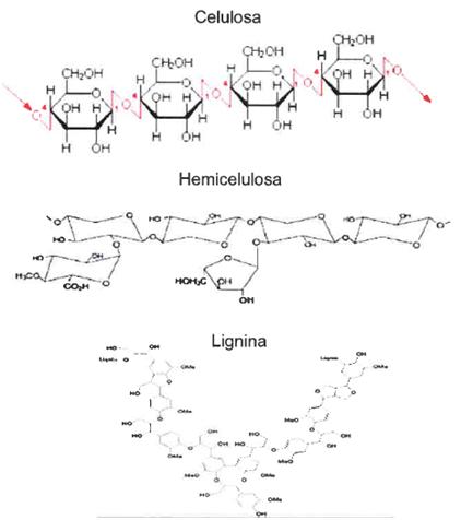 Celulosa Hemicelulosa Lignina